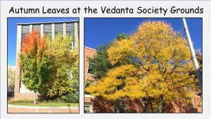 10-19 Autumn Leaves on the Vedanta Society's Grounds